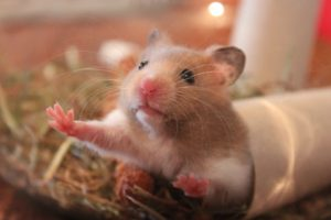 If you're moving with a hamster, you likely won't need to use pet moving services NYC.