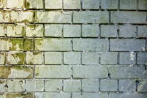 How to protect your home against mold?