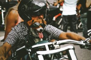 A dog with sunglasses on a motorcycle