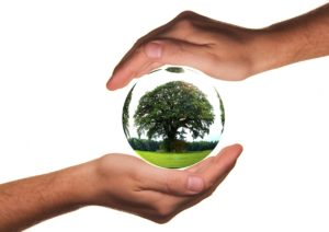 A tree in a bubble protected by hands - Eco-friendly moving tips